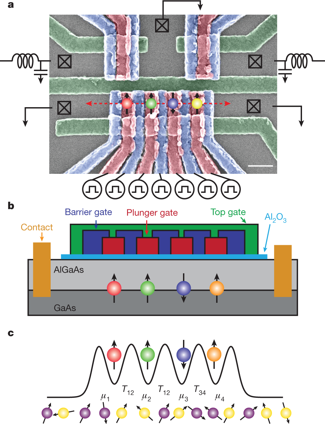 Coherent spin-state transfer via Heisenberg exchange