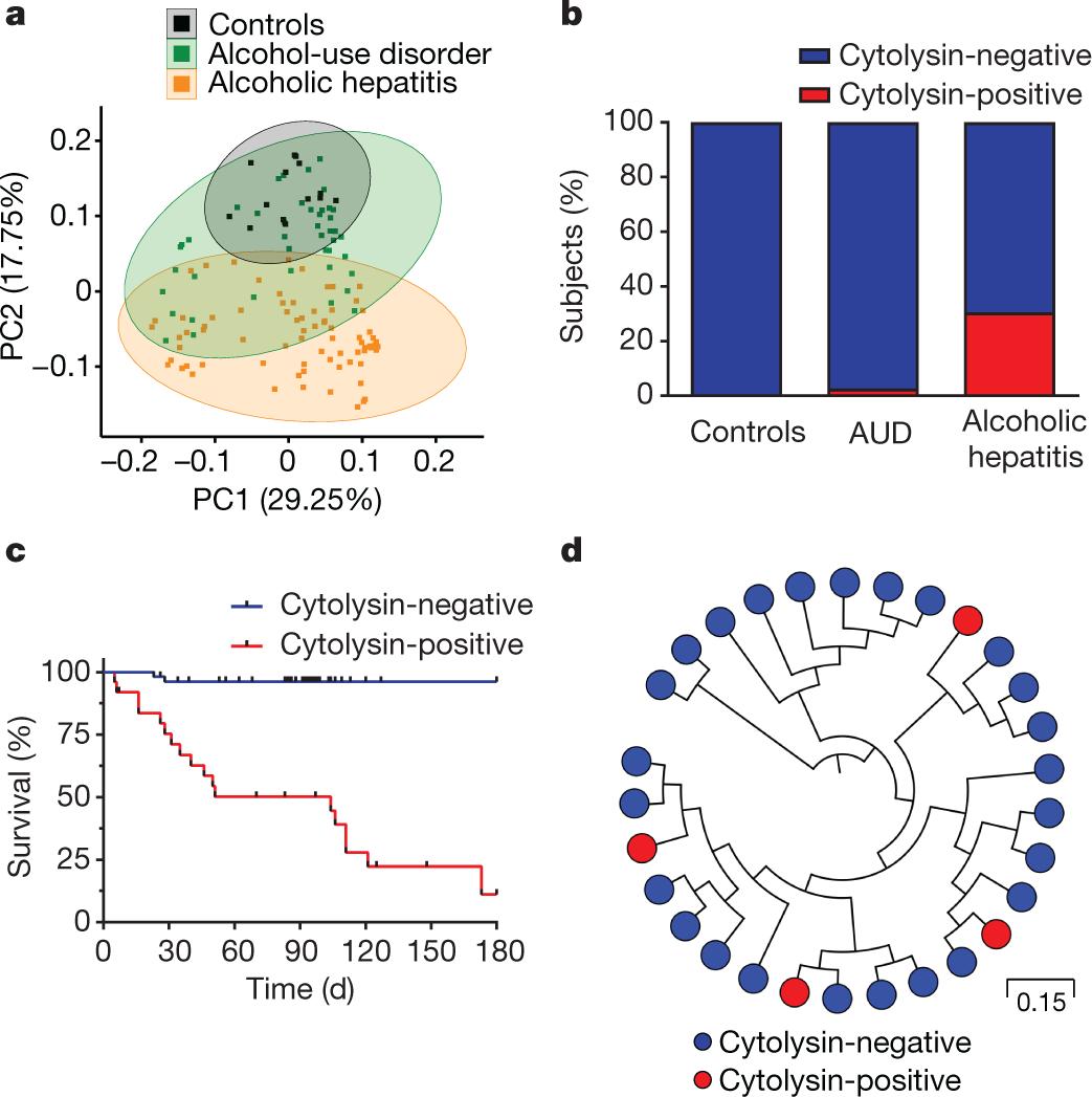 Bacteriophage Targeting Of Gut Bacterium Attenuates