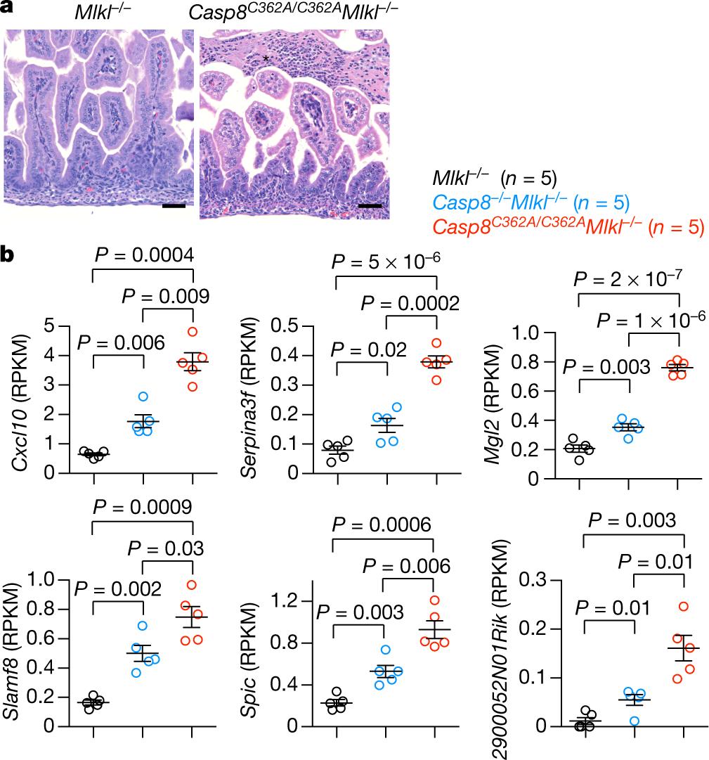 Activity of caspase-8 determines plasticity between cell death pathway