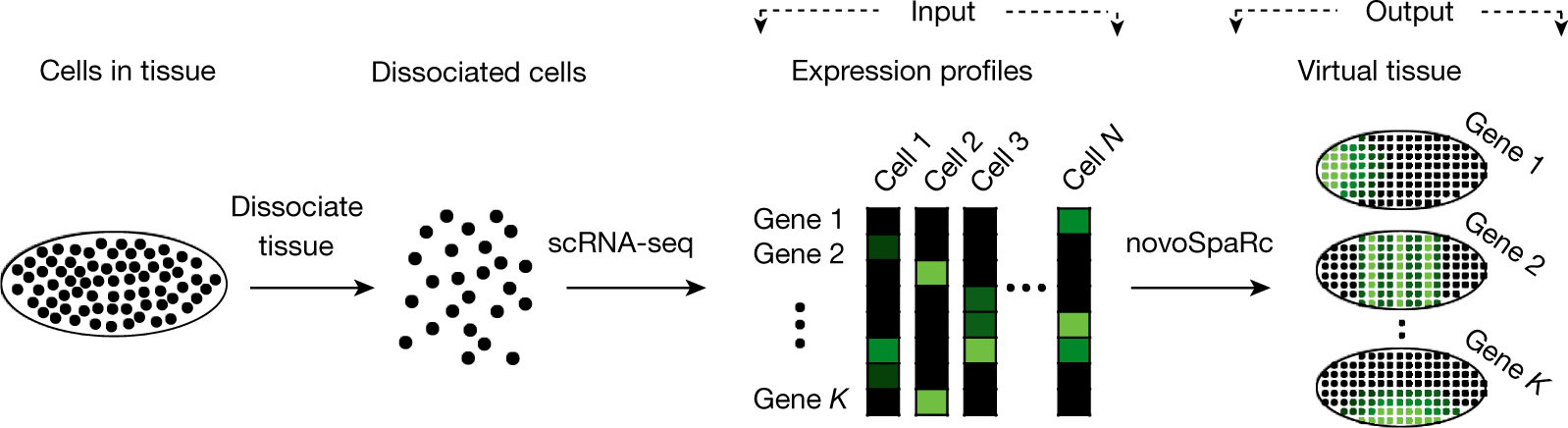 Gene expression cartography