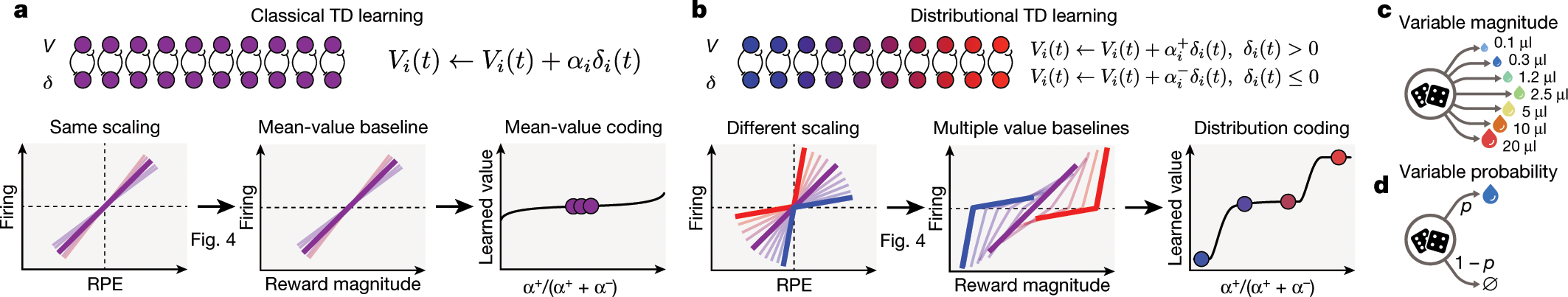 A distributional code for value in dopamine-based reinforcement learni
