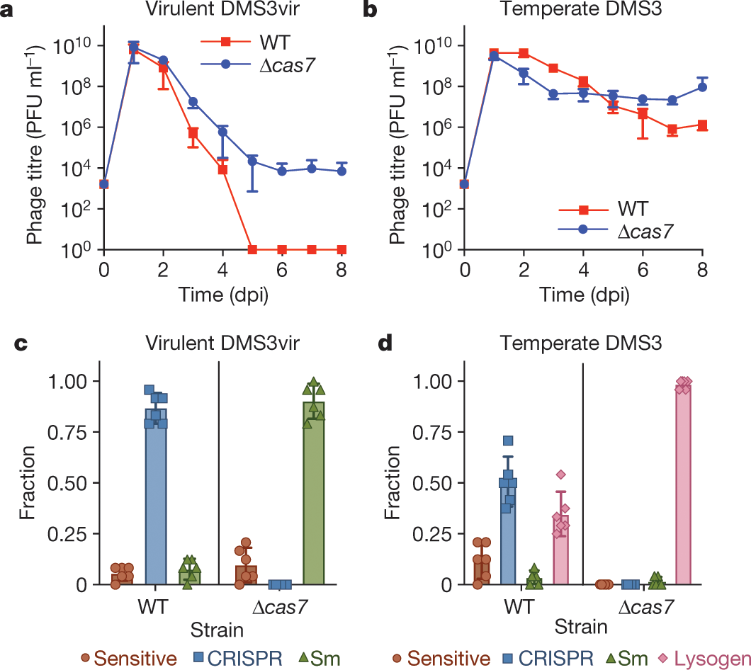 Targeting of temperate phages drives loss of type I CRISPR–
