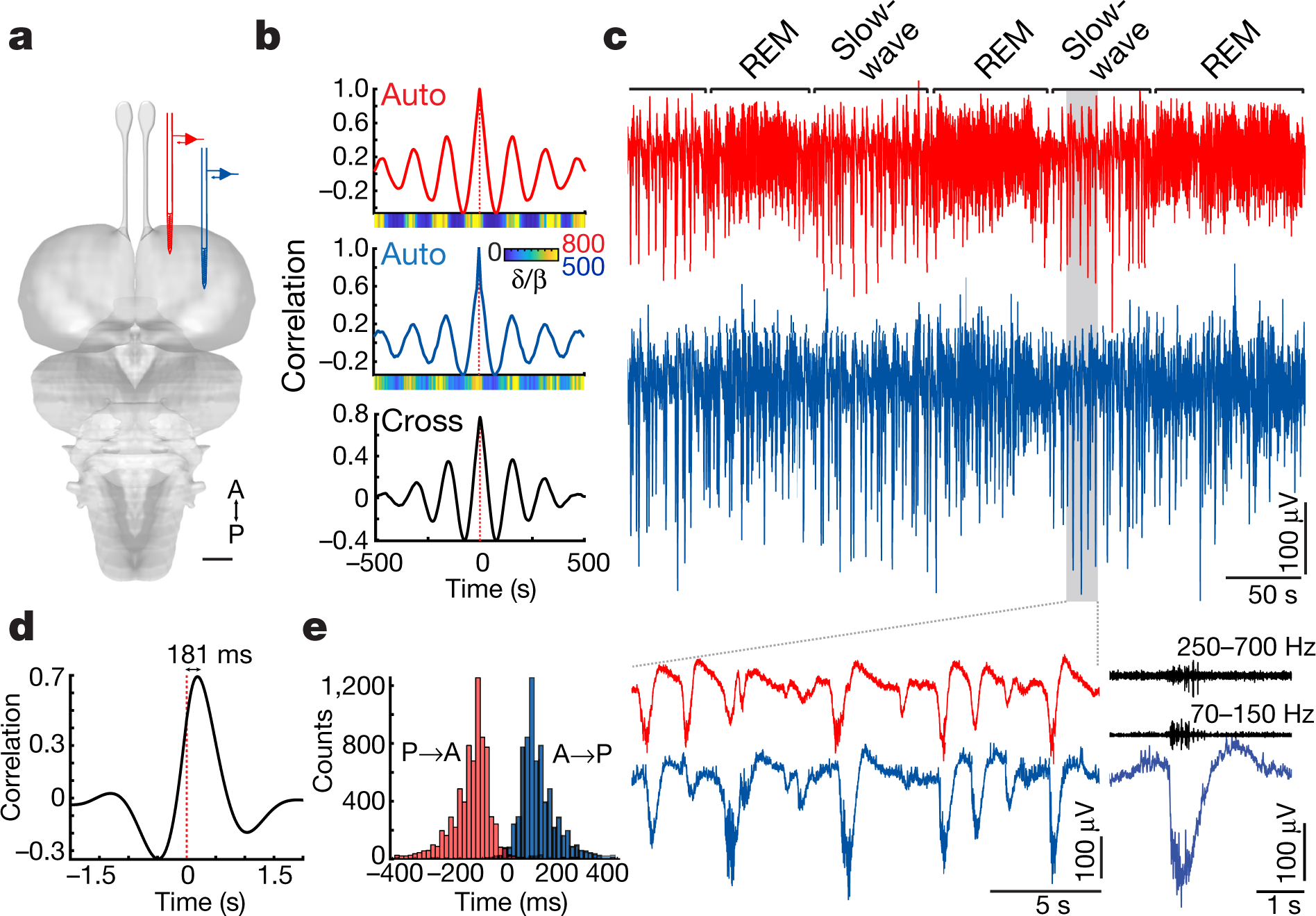 Comment Tracer Un Trait Horizontal Sur Un Mur a claustrum in reptiles and its role in slow-wave sleep | nature