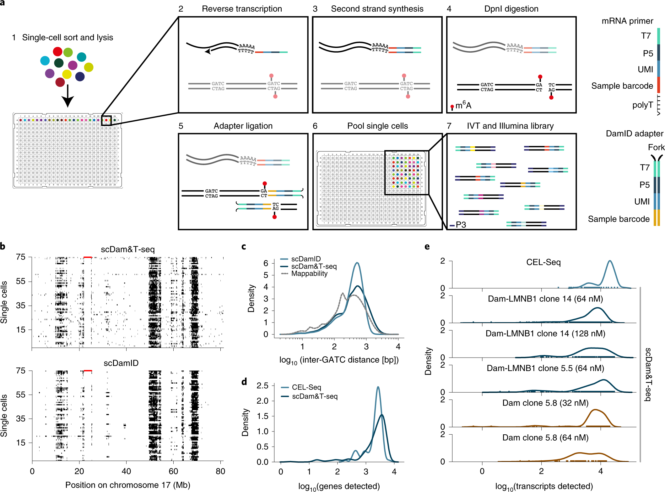 2ca6239e Simultaneous quantification of protein–DNA contacts and transcriptomes in  single cells   Nature Biotechnology