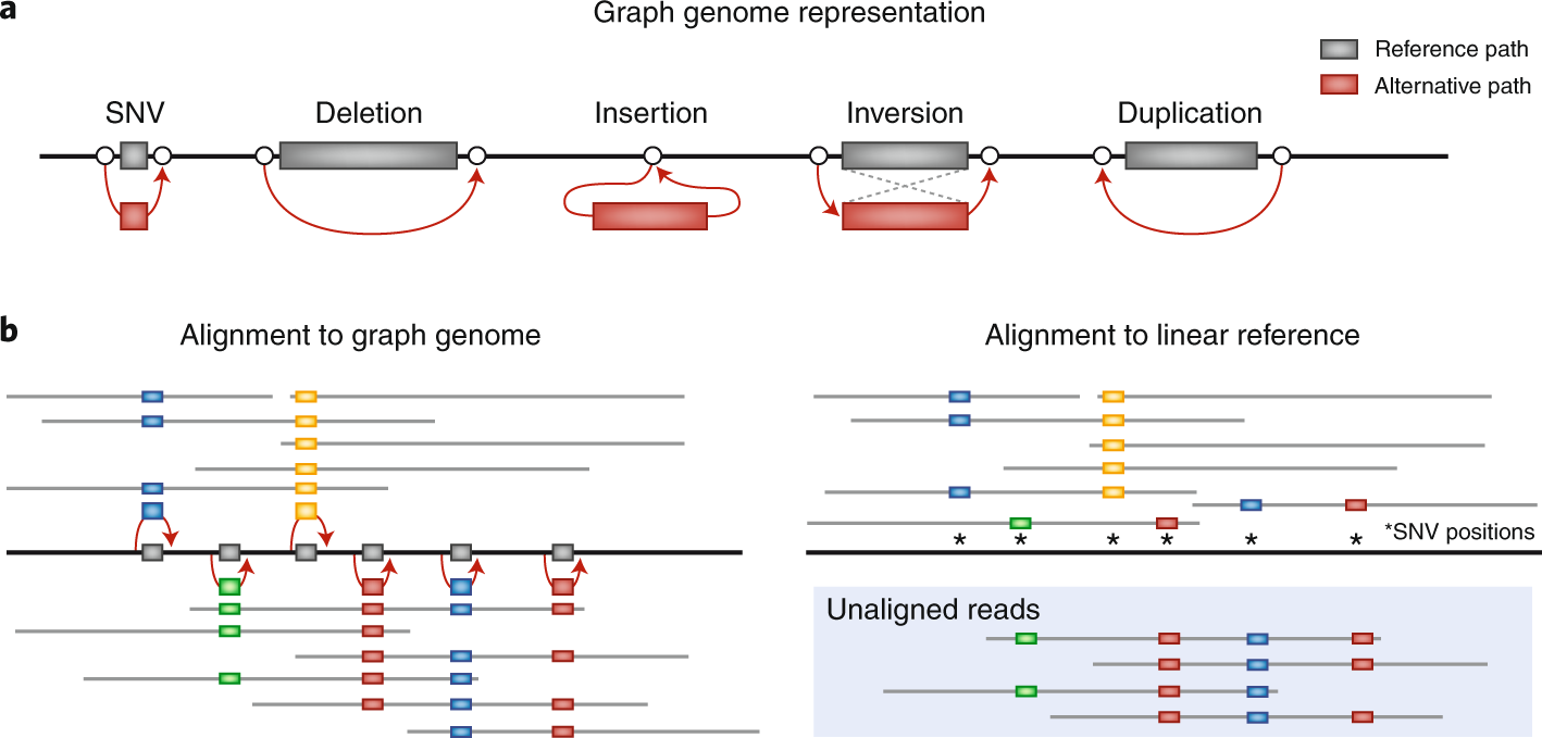 Goodbye reference, hello genome graphs