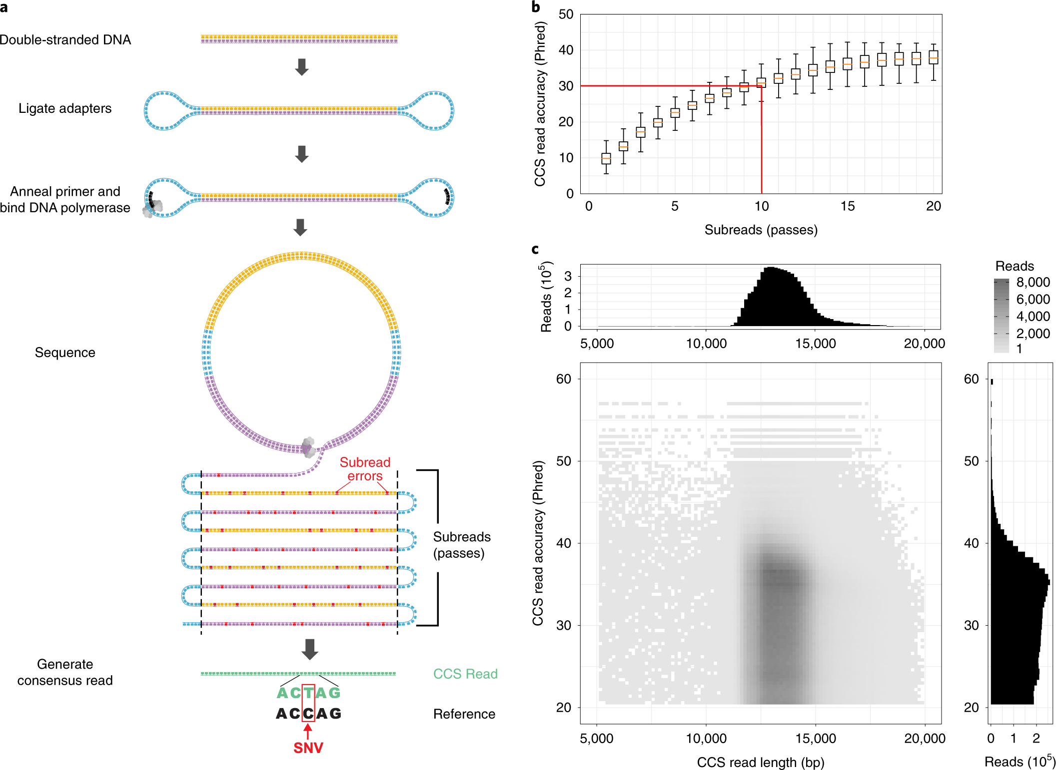 Accurate circular consensus long-read sequencing improves variant dete