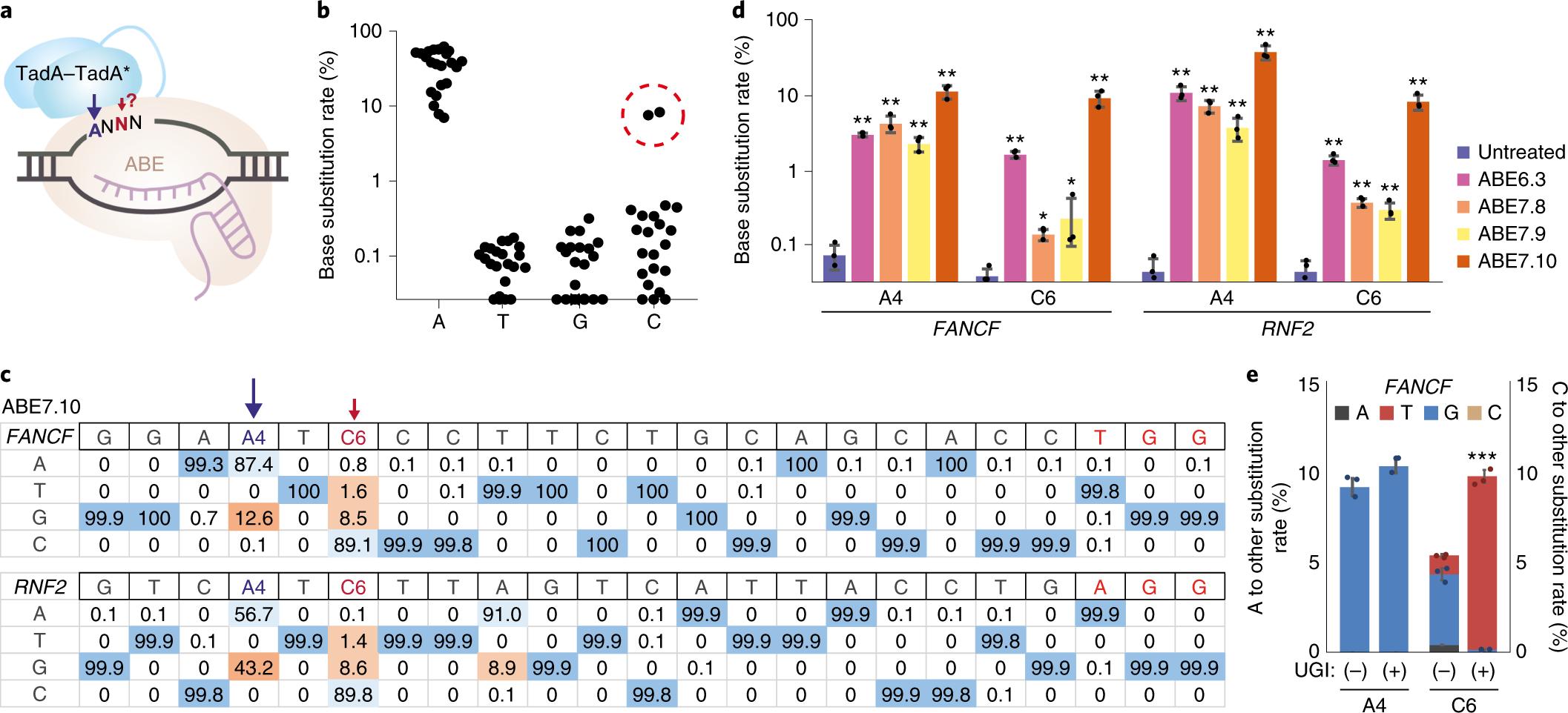 Adenine base editors catalyze cytosine conversions in human cells