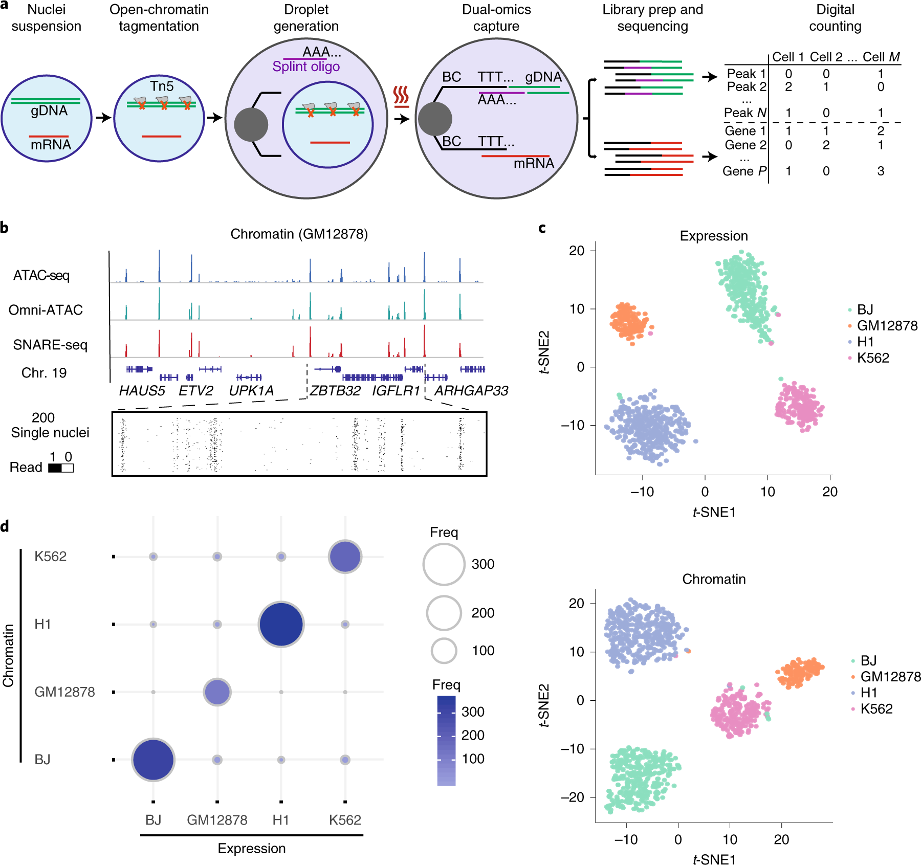 High-throughput sequencing of the transcriptome and chromatin accessib