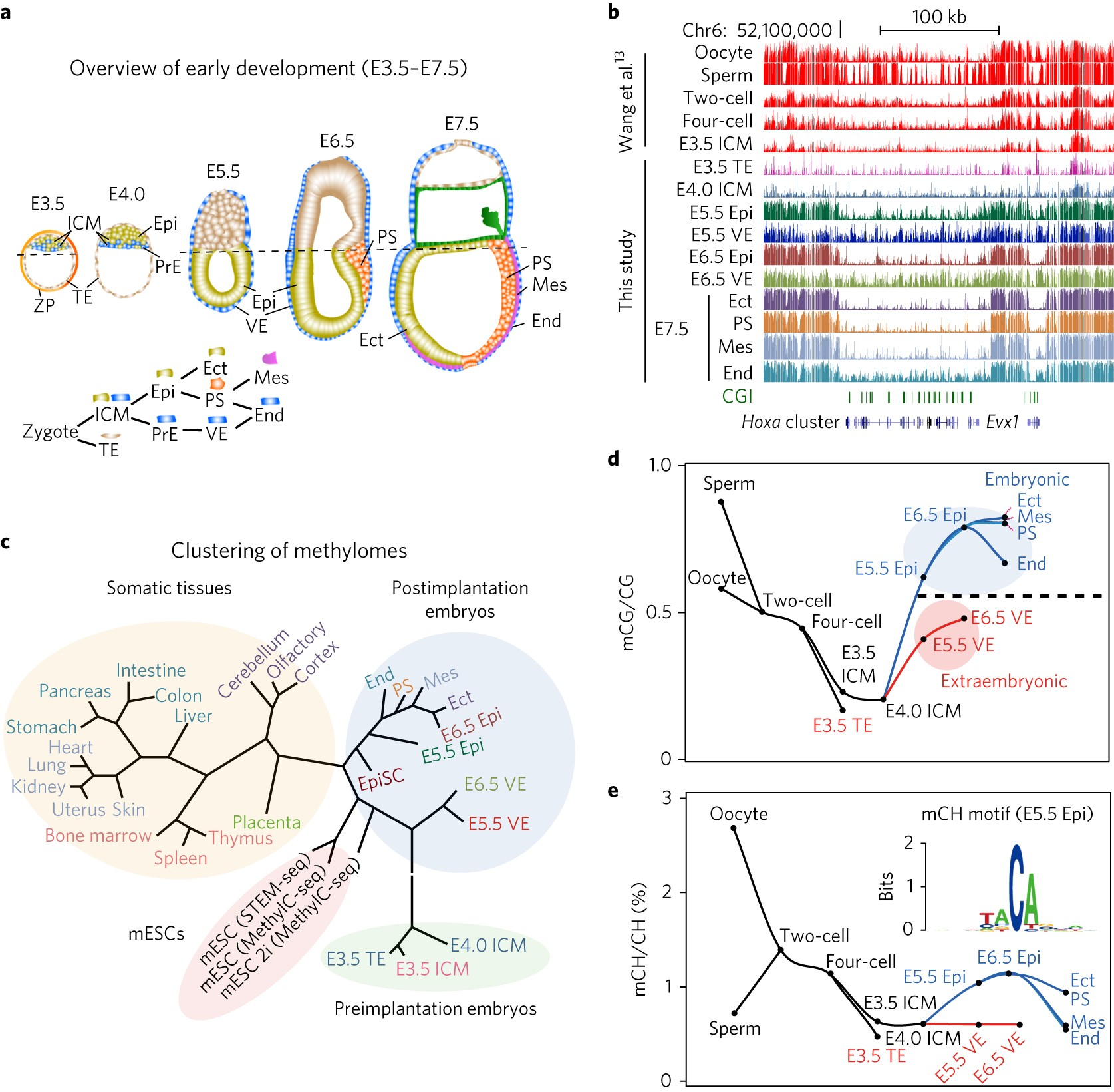 Dynamic epigenomic landscapes during early lineage specification in on