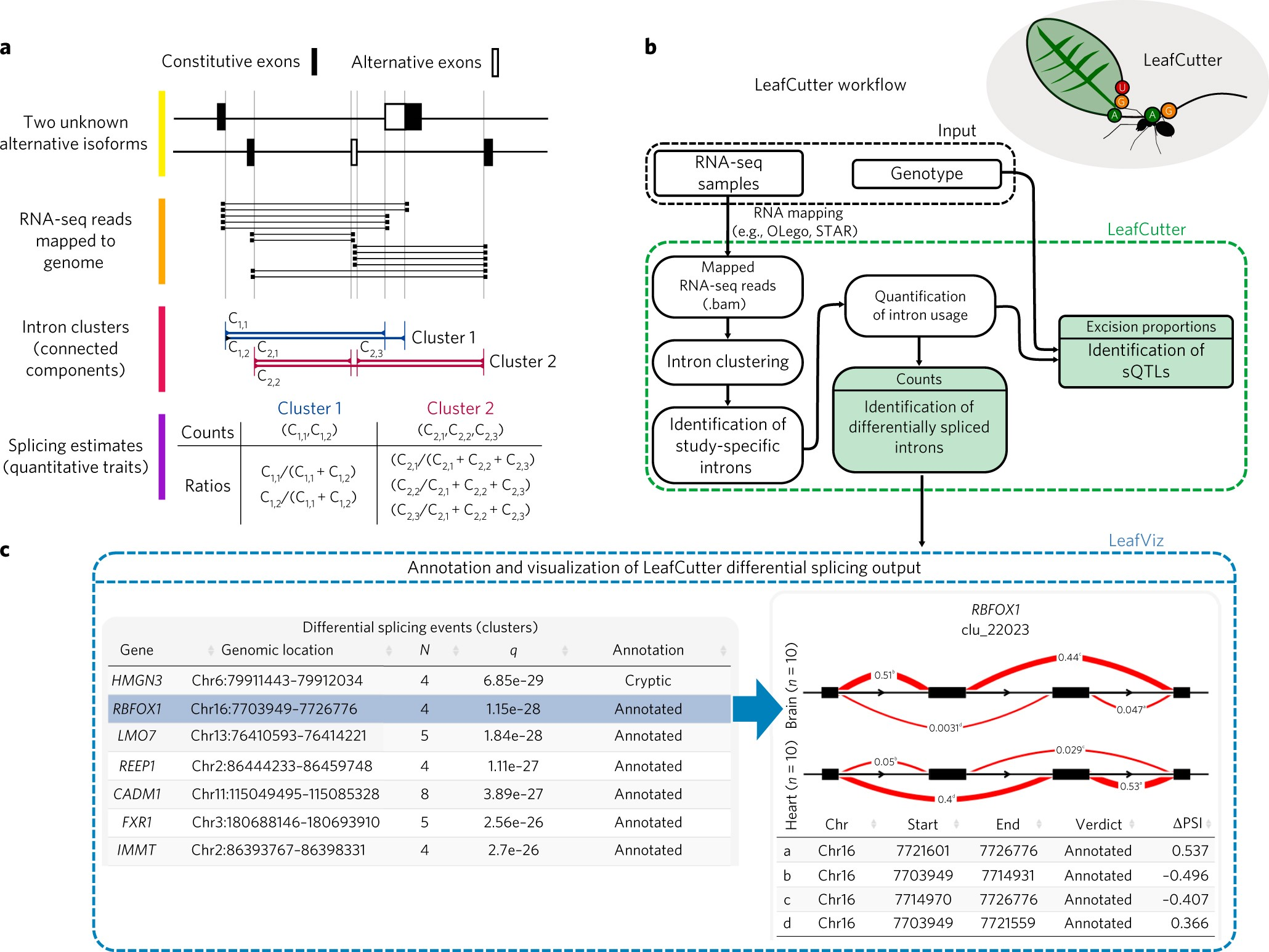 Annotation-free quantification of RNA splicing using LeafCutter