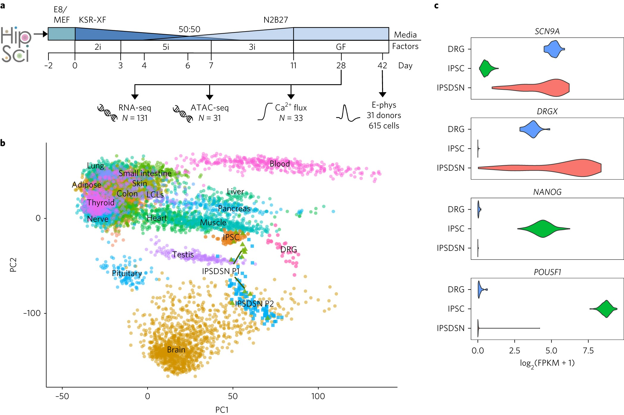 molecular and functional variation in ipsc derived sensory neuronsmolecular and functional variation in ipsc derived sensory neurons nature genetics