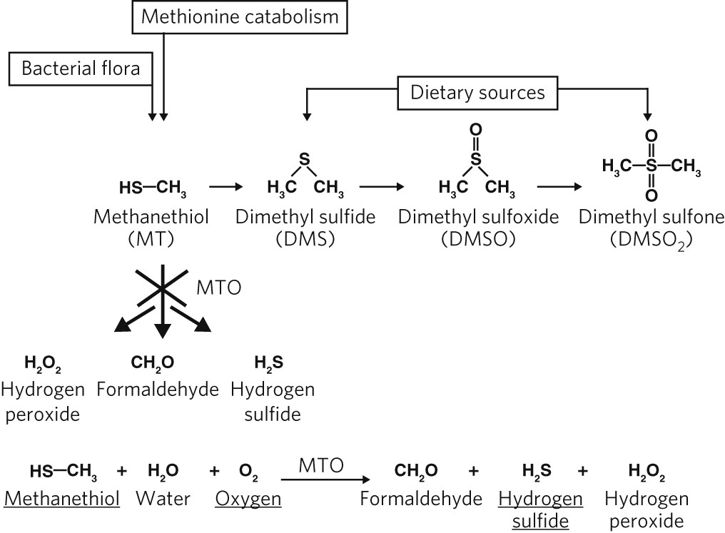Mutations in SELENBP1 , encoding a novel human methanethiol oxidase