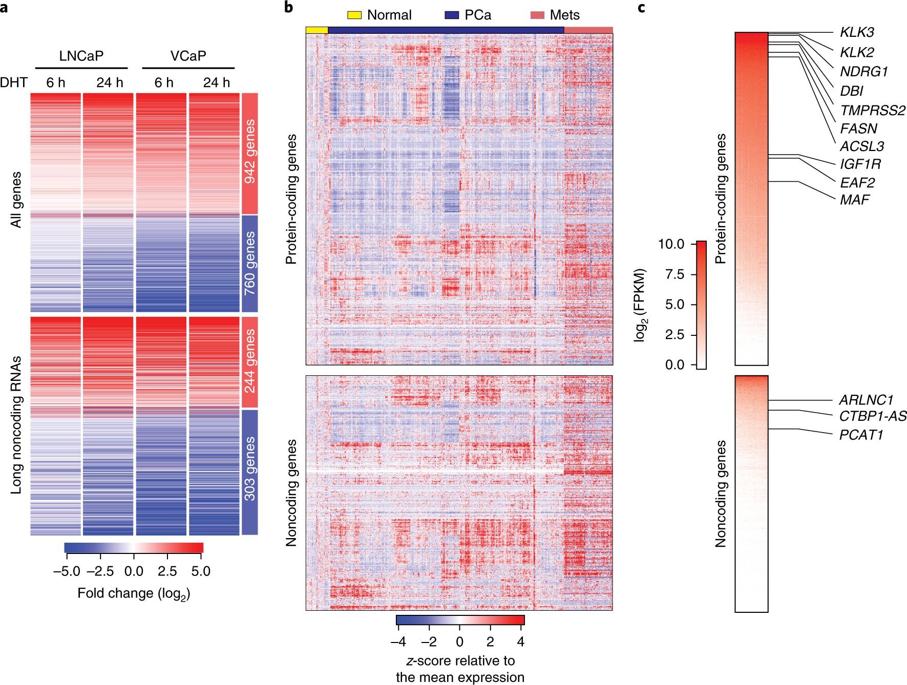 analysis of the androgen receptor\u2013regulated lncrna landscapeanalysis of the androgen receptor\u2013regulated lncrna landscape identifies a role for arlnc1 in prostate cancer progression nature genetics
