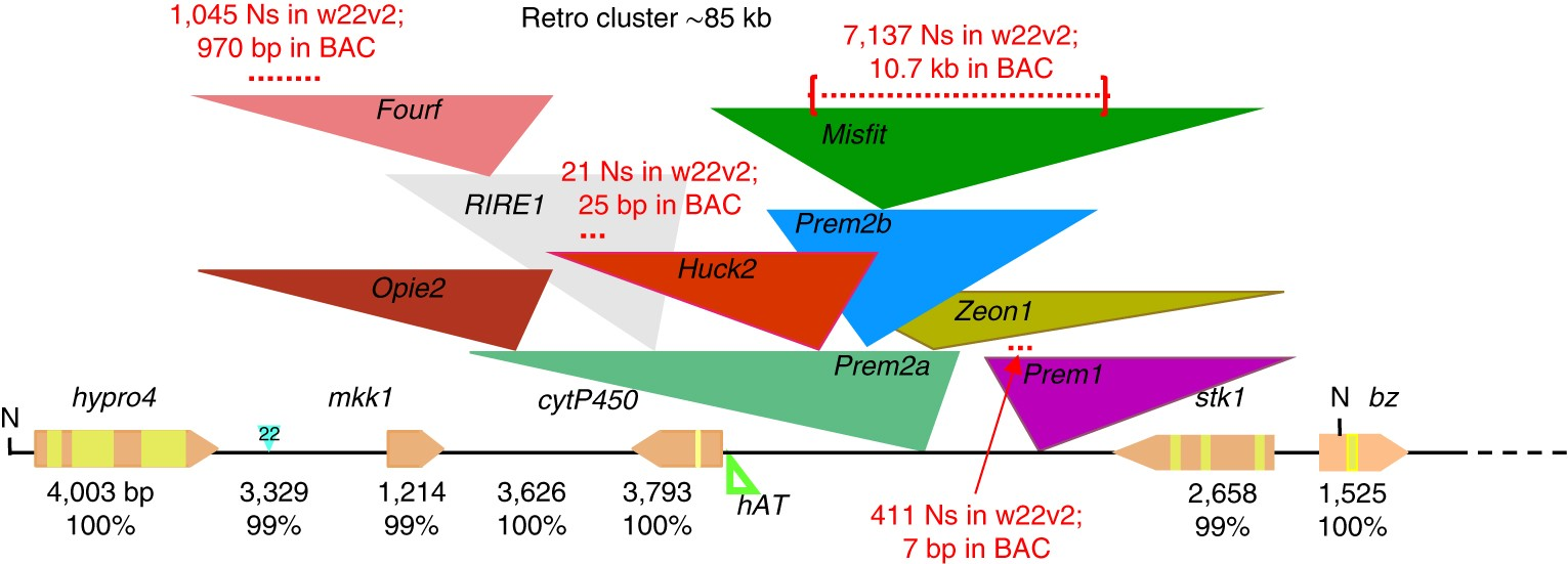 The maize W22 genome provides a foundation for functional genomics