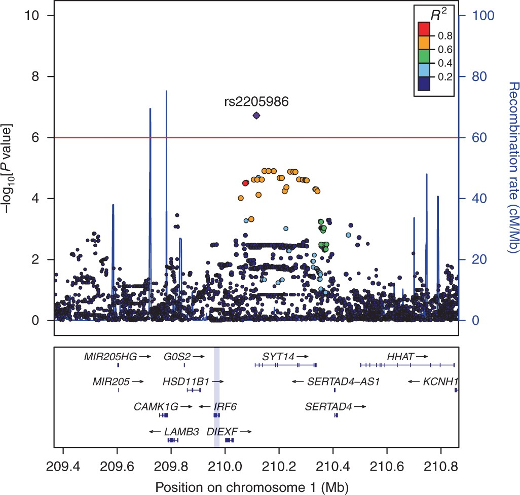 Common variation near IRF6 is associated with IFN-β-induced