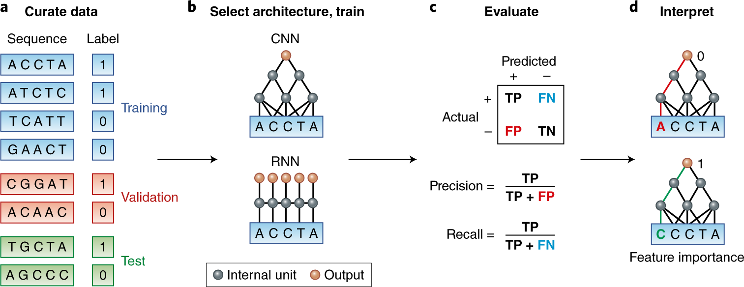 A Primer On Deep Learning In Genomics Nature Genetics