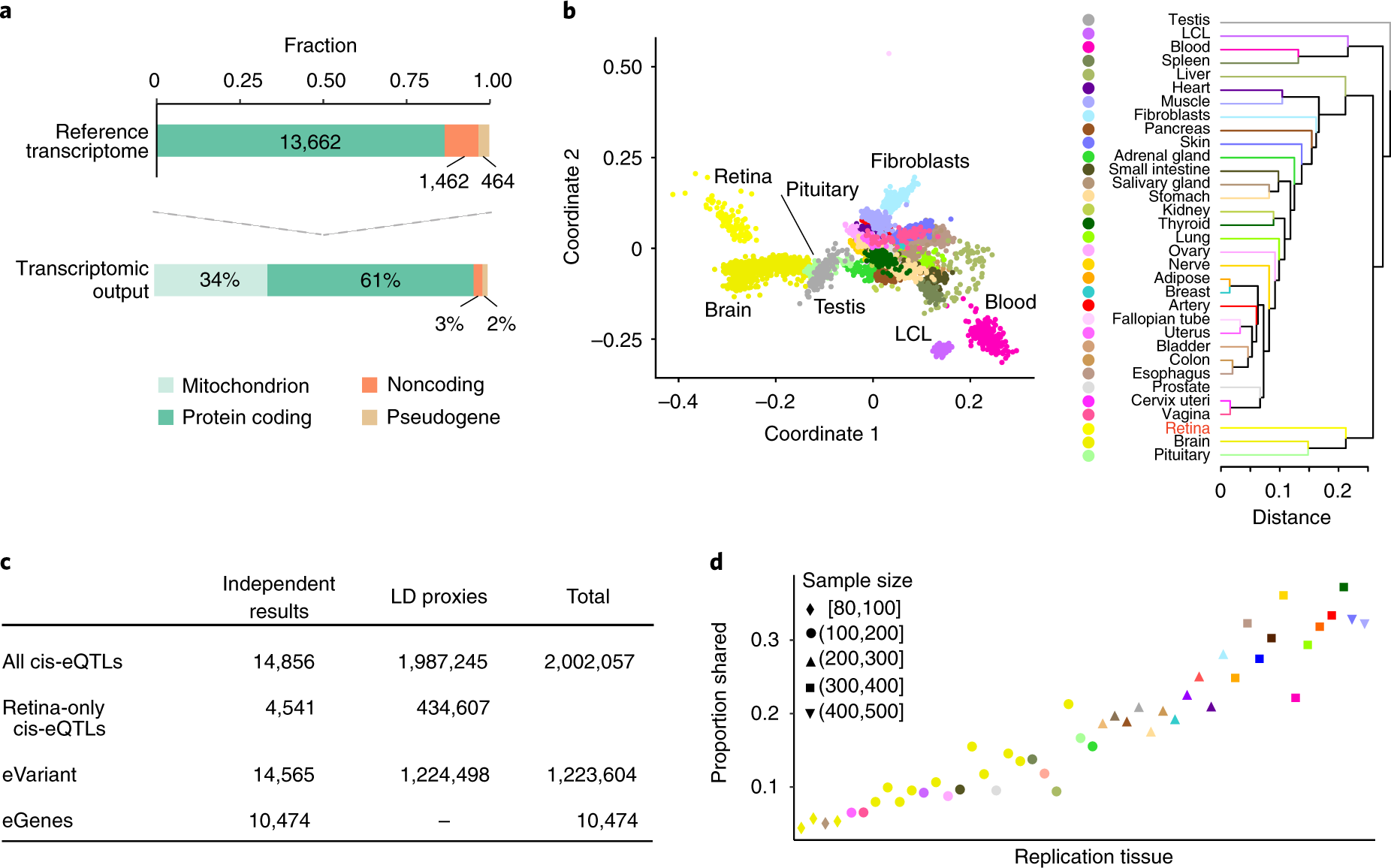 retinal transcriptome and eqtl analyses identify genes associated