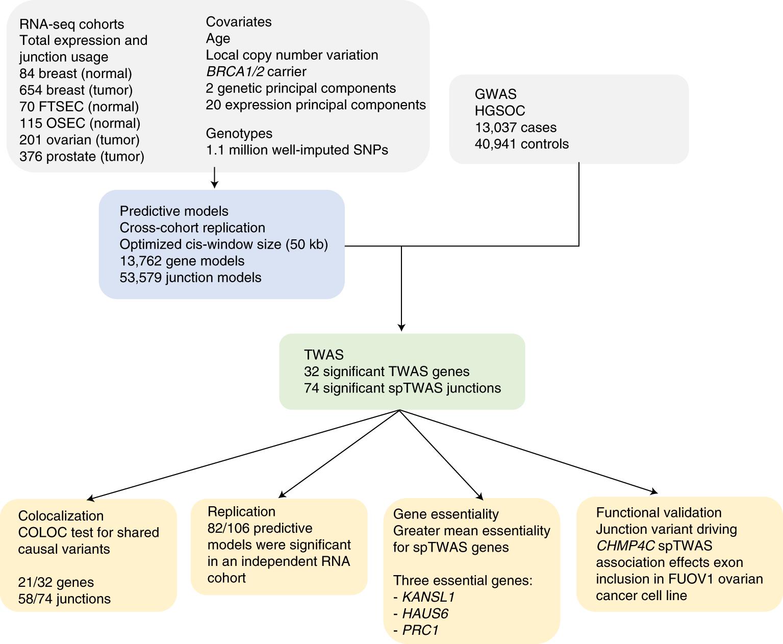 A transcriptome-wide association study of high-grade serous