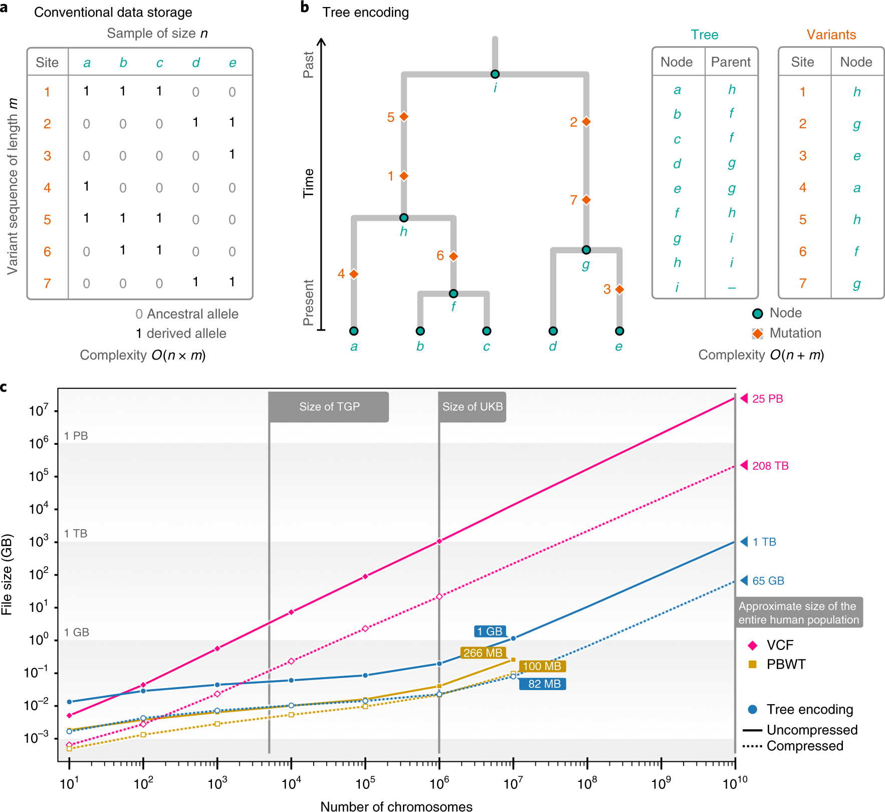 Inferring whole-genome histories in large population