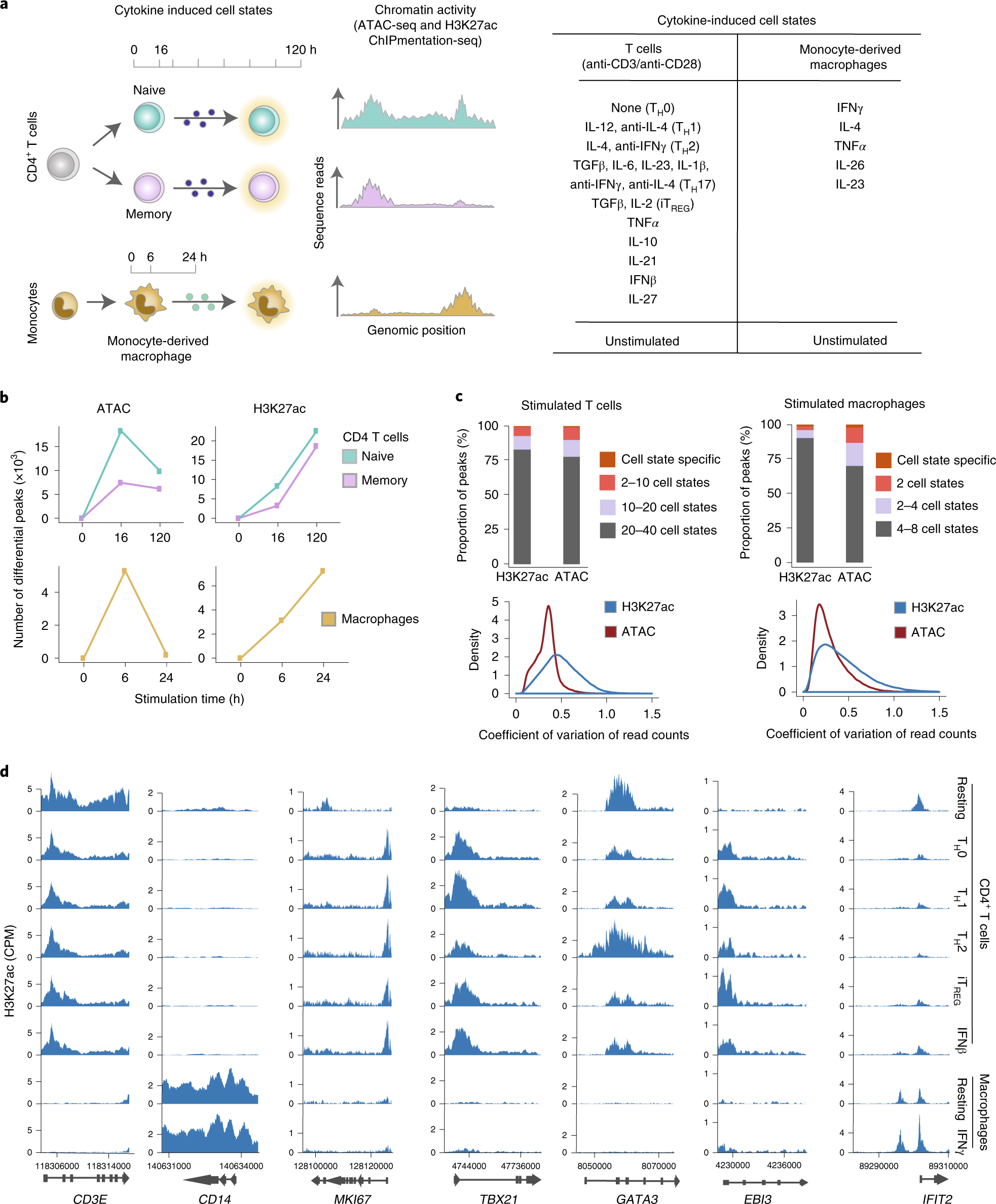 Chromatin activity at GWAS loci identifies T cell states driving compl