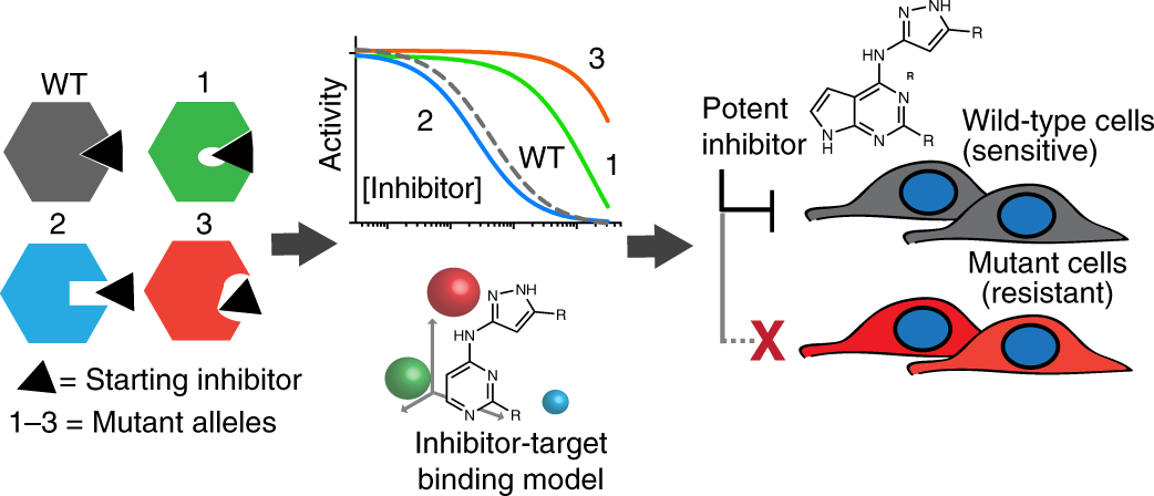 Designing a chemical inhibitor for the AAA protein spastin