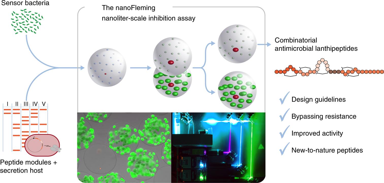 Analysis of modular bioengineered antimicrobial
