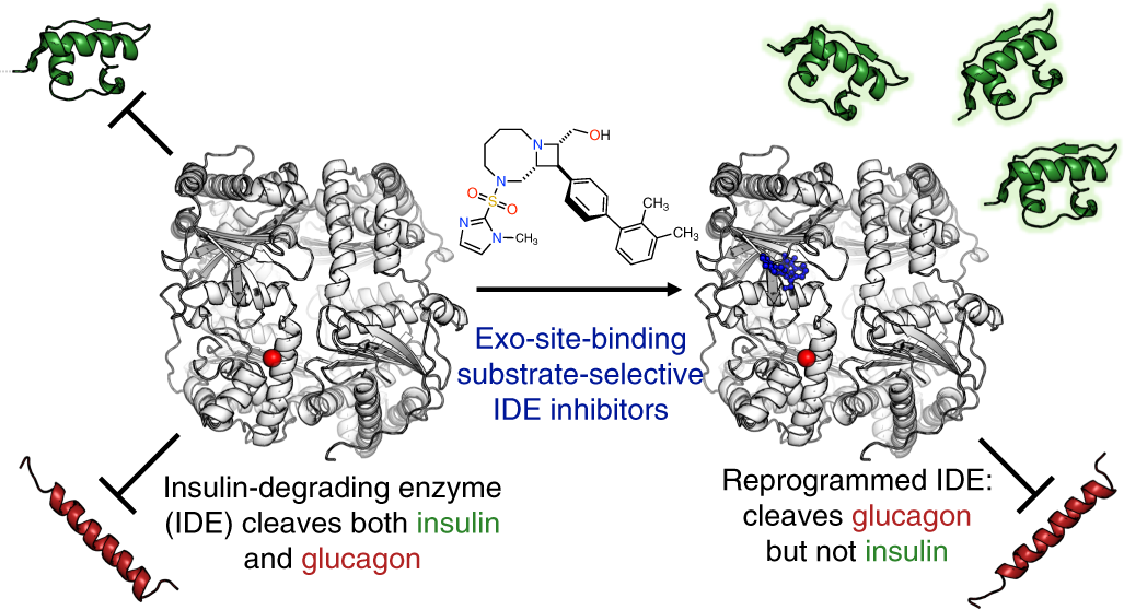 Substrate-selective inhibitors that reprogram the activity of