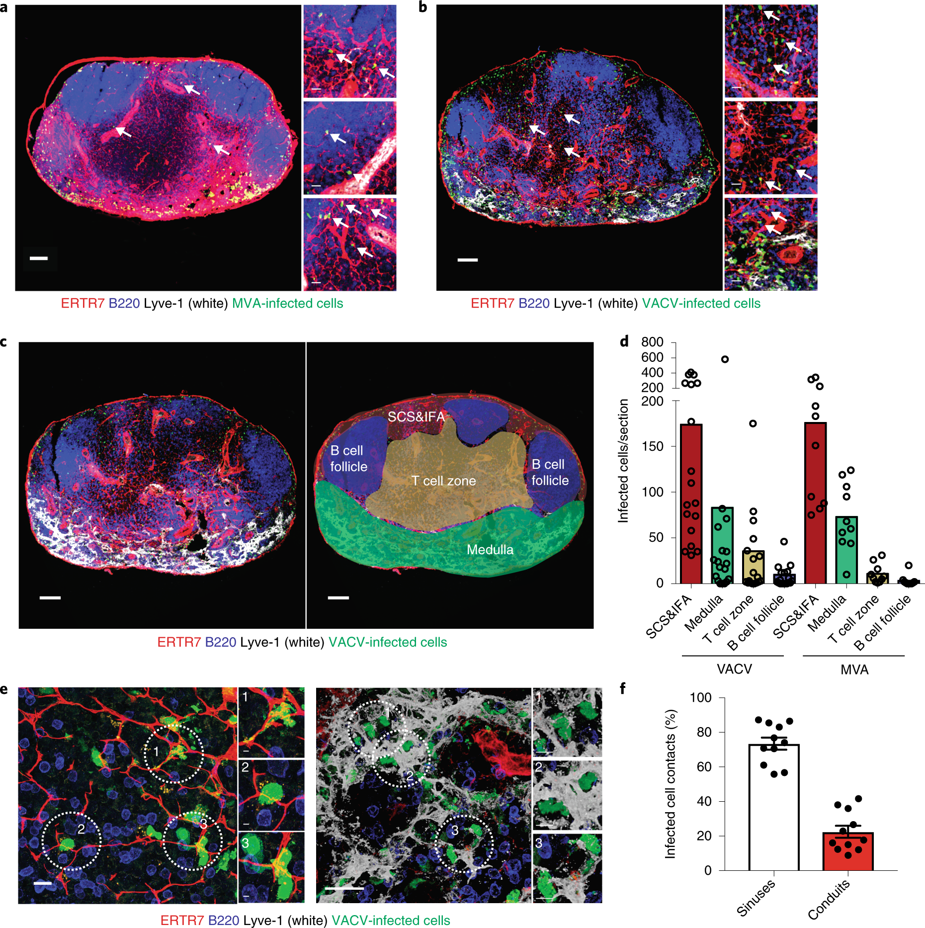 Lymph node conduits transport virions for rapid T cell activation