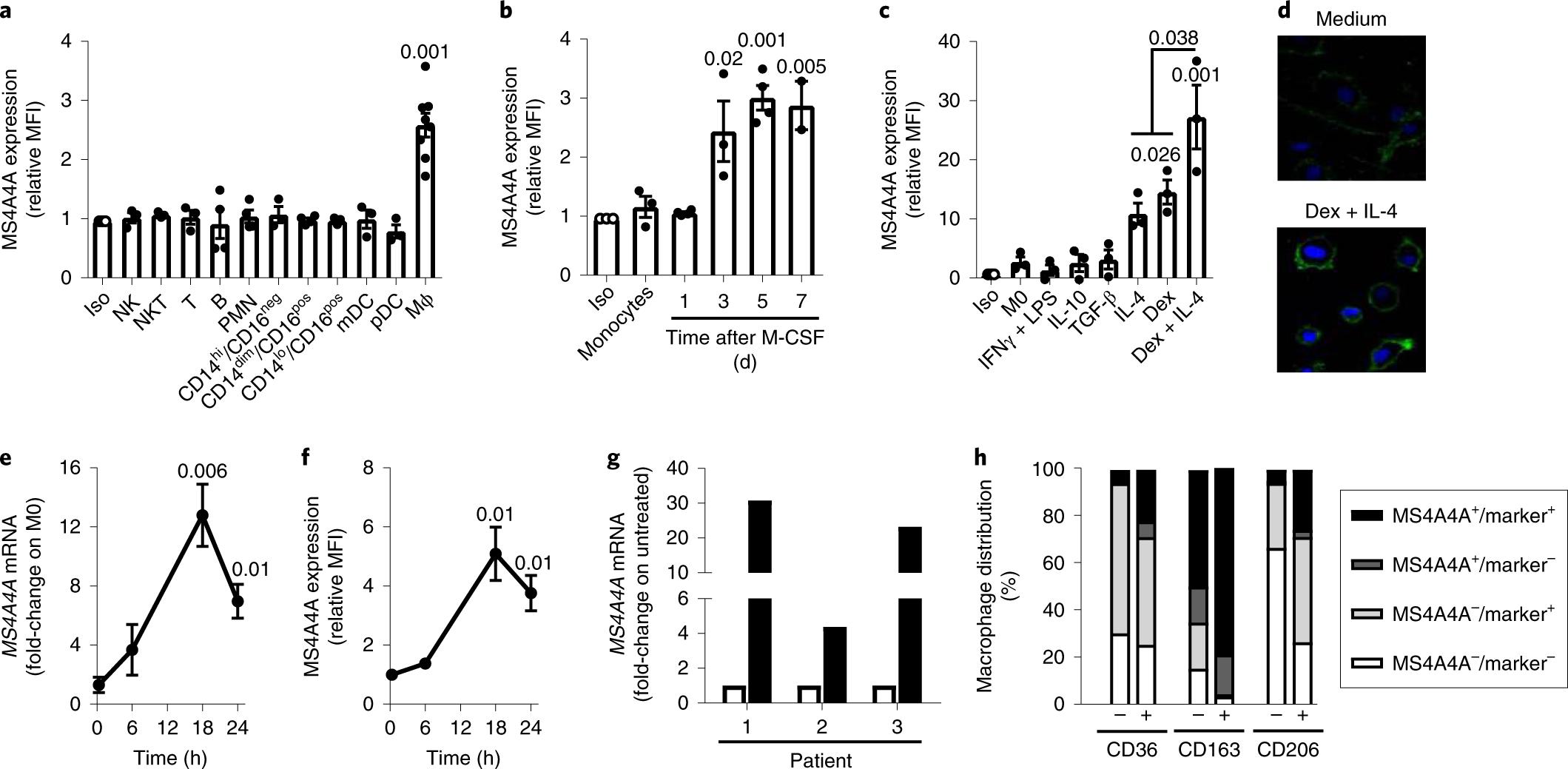 The macrophage tetraspan MS4A4A enhances dectin-1-dependent