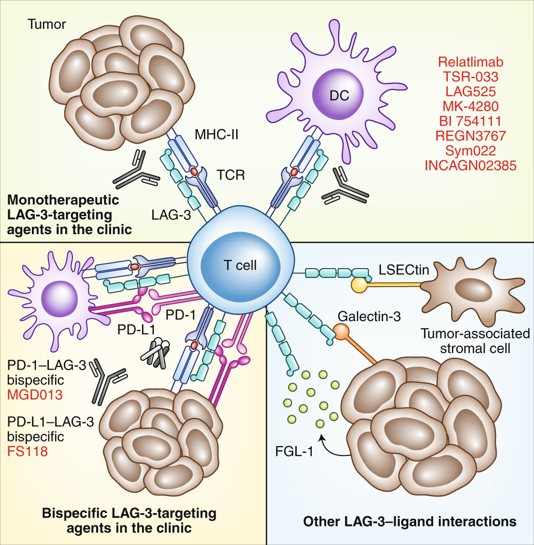 Inhibitory receptors and ligands beyond PD-1, PD-L1 and CTLA-4: breakt