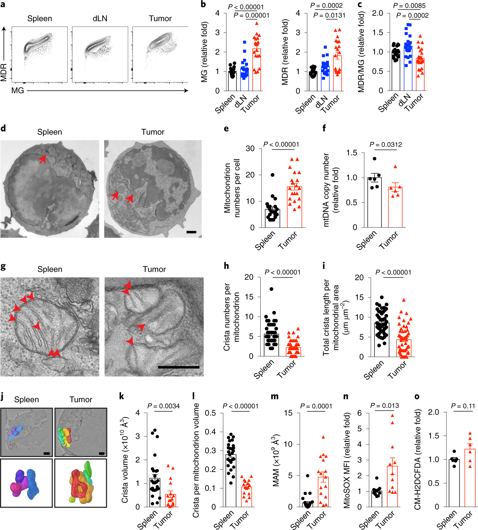 Disturbed mitochondrial dynamics in CD8+ TILs reinforce T cell ...