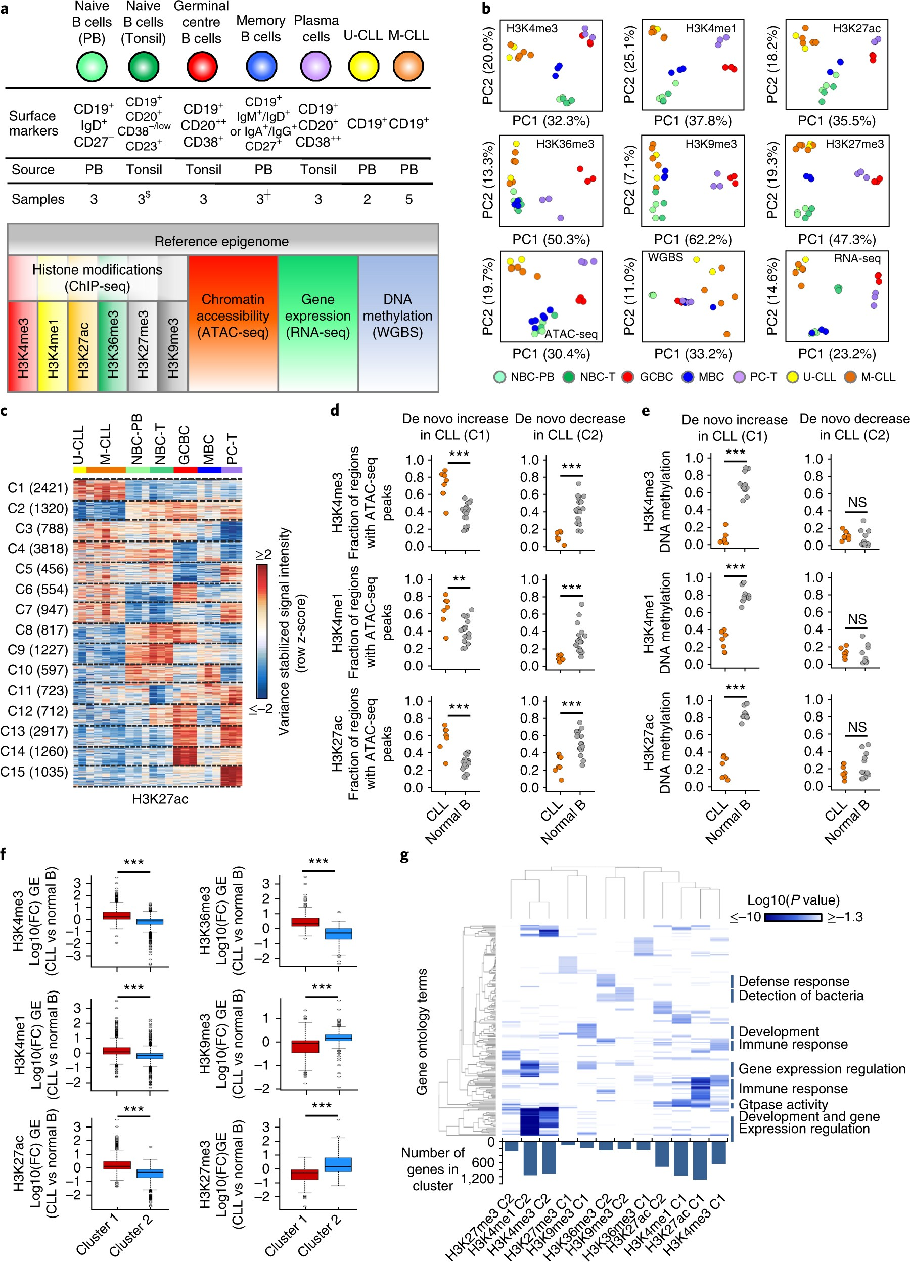 The reference epigenome and regulatory chromatin landscape of