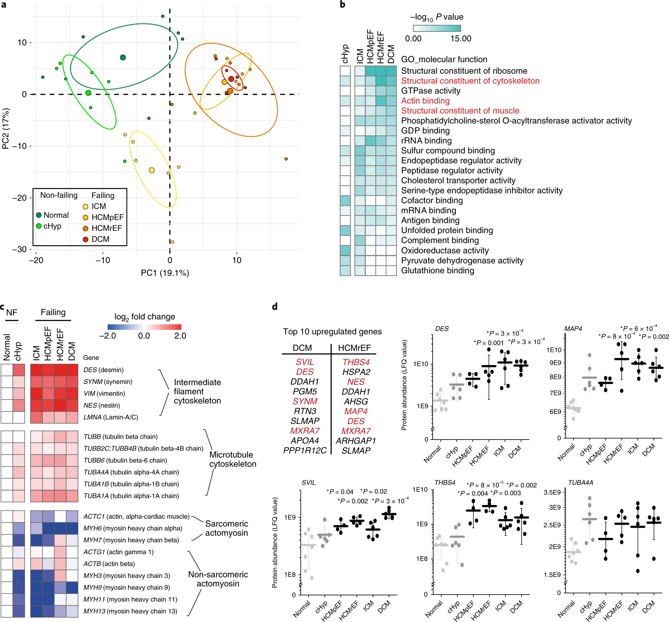 Suppression Of Detyrosinated Microtubules Improves Cardiomyocyte Thread Wj Vacuum Diagram Function In Human Heart Failure Nature Medicine