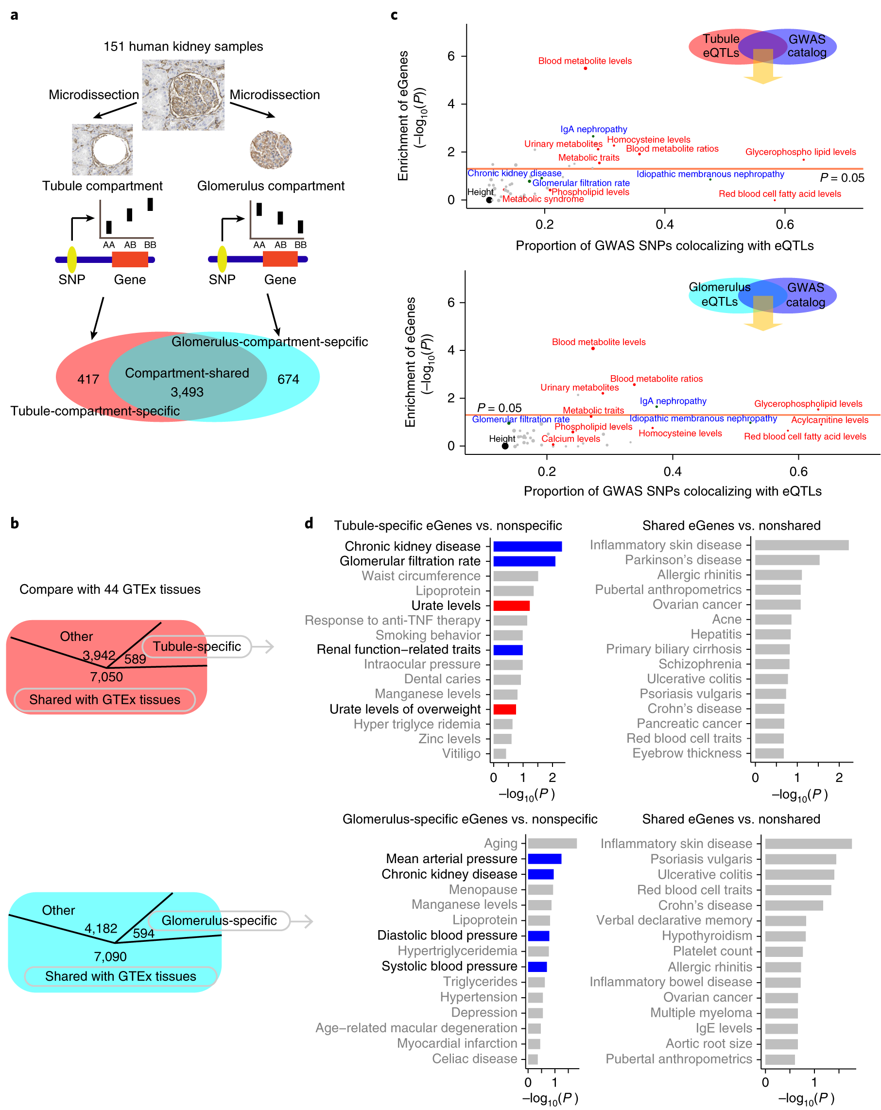 Renal compartment–specific genetic variation analyses identify new