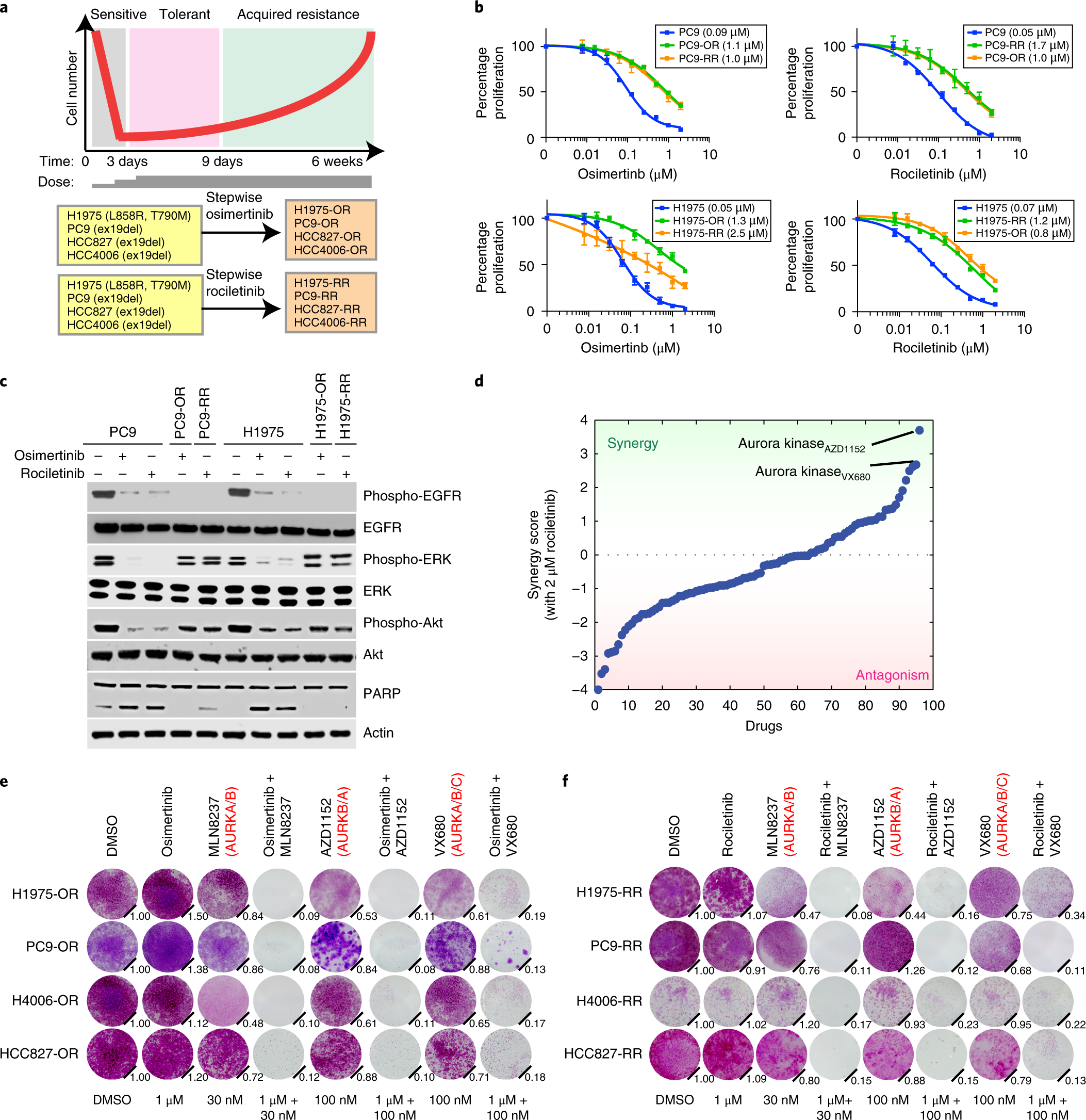 Aurora kinase A drives the evolution of resistance to third