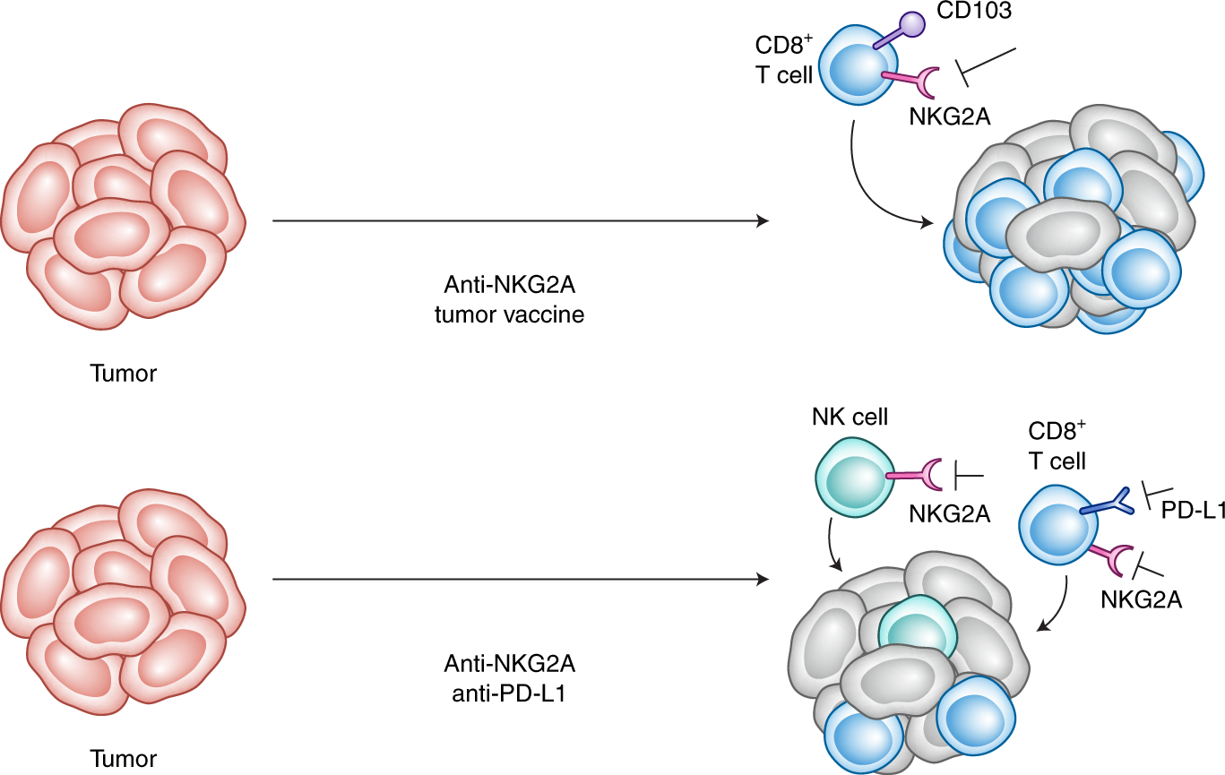 Adding to the checkpoint blockade armamentarium | Nature Medicine