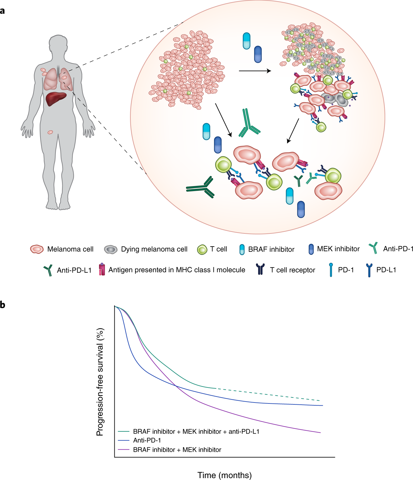 Combining checkpoint inhibition and targeted therapy in melanoma ...