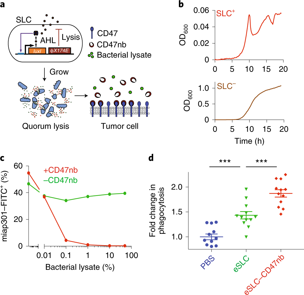 Programmable bacteria induce durable tumor regression and systemic ant