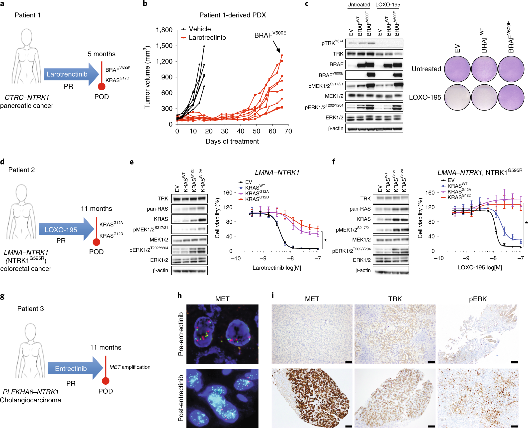 Resistance to TRK inhibition mediated by convergent MAPK pathway activ