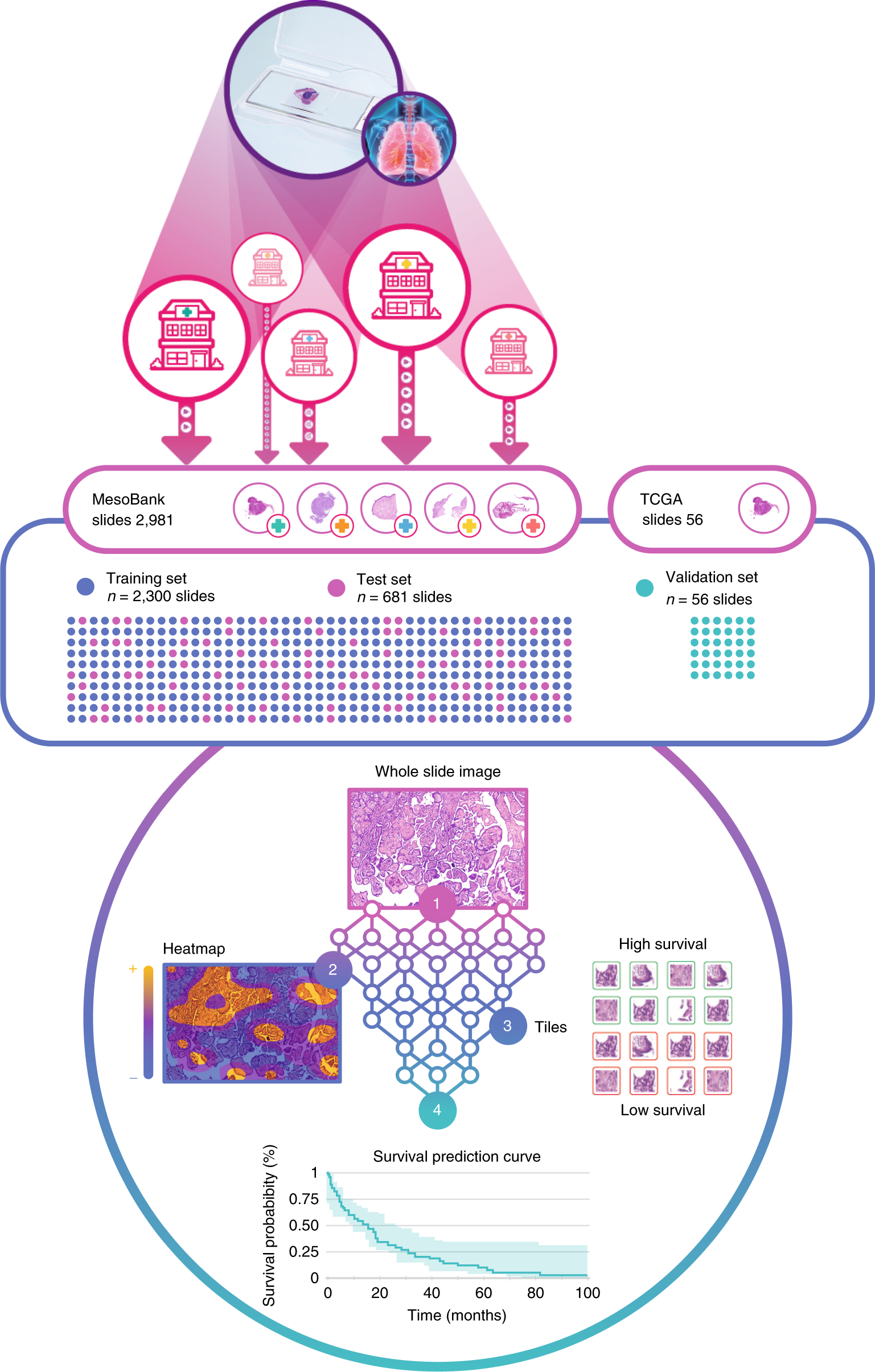 Deep learning-based classification of mesothelioma improves prediction