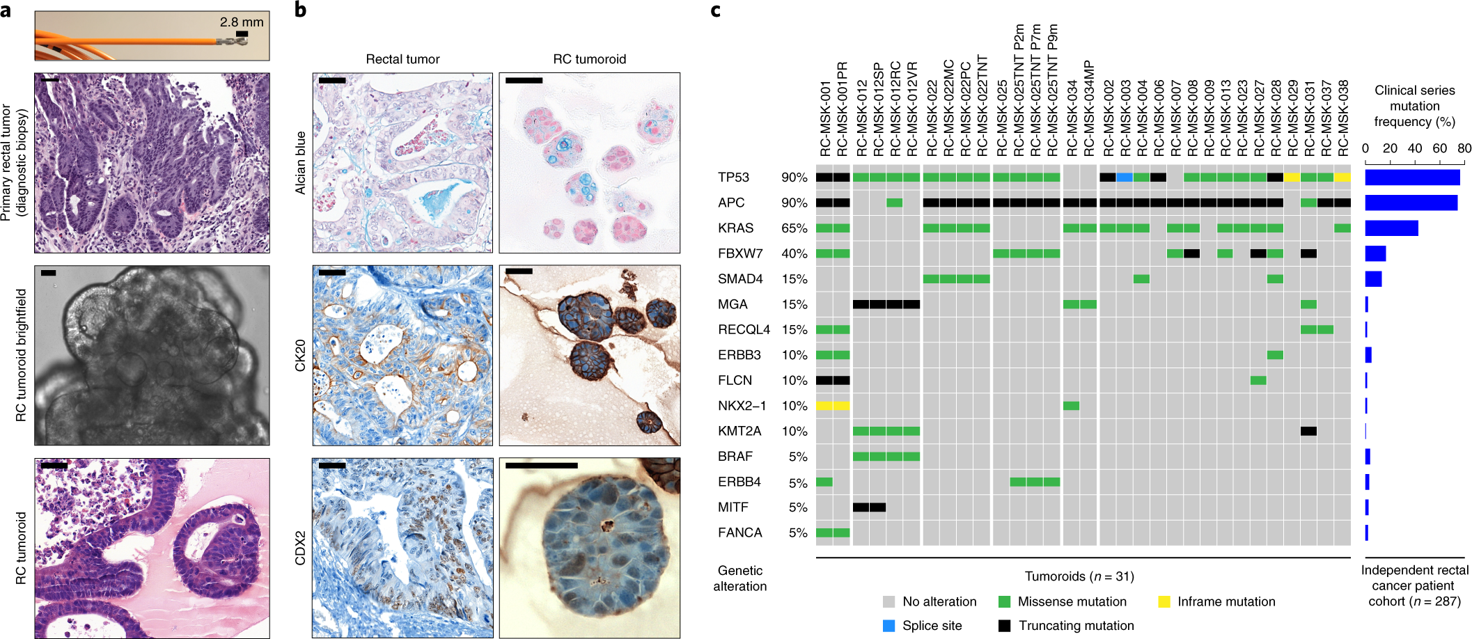 A rectal cancer organoid platform to study individual responses to che