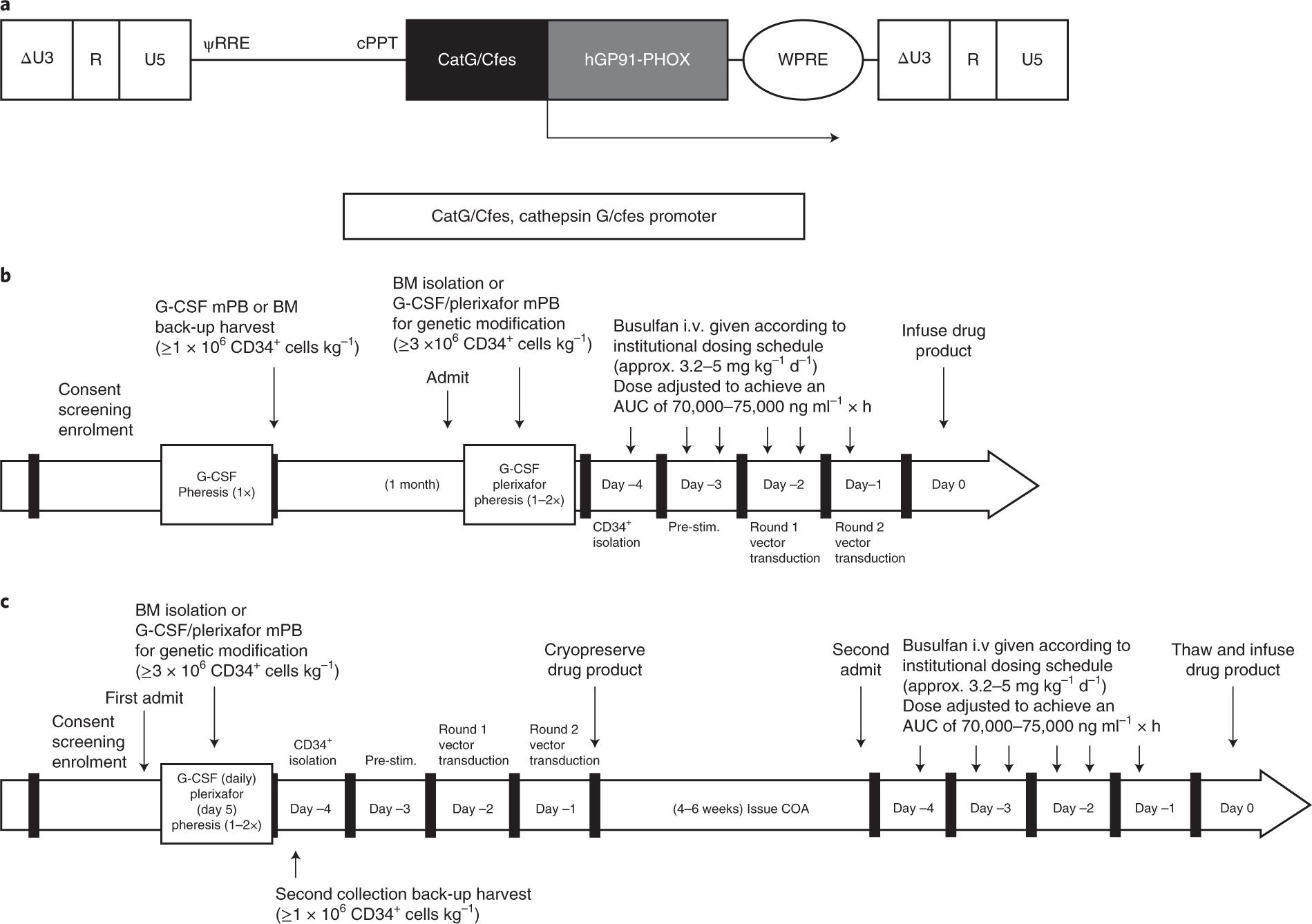 Lentiviral gene therapy for X-linked chronic granulomatous disease