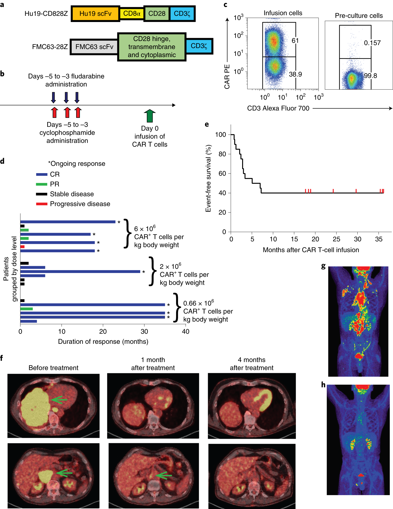 Safety and feasibility of anti-CD19 CAR T cells with fully human bindi