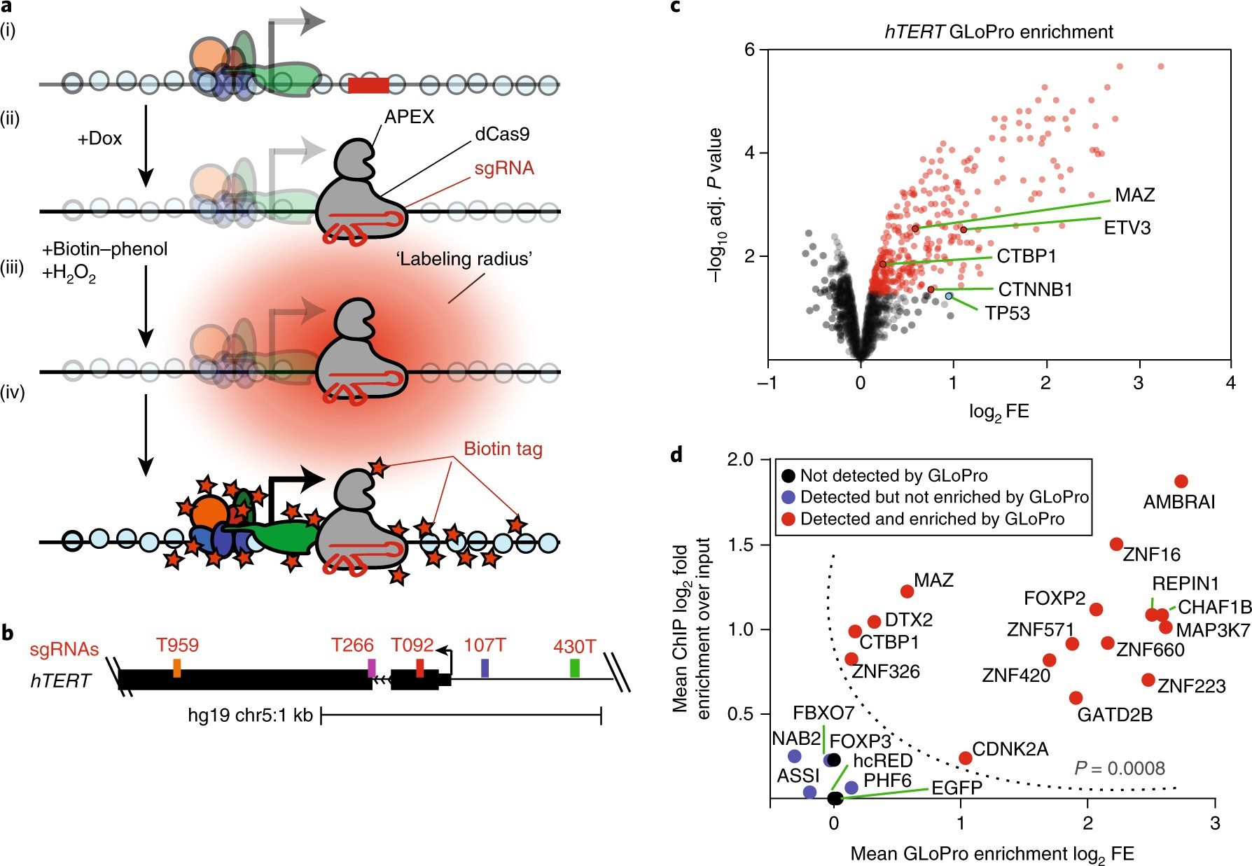Discovery of proteins associated with a predefined genomic locus via