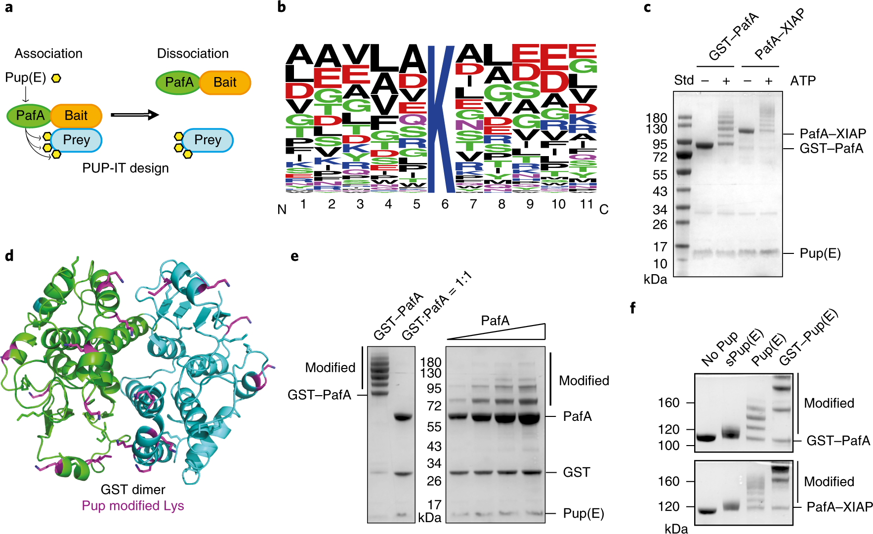 A proximity-tagging system to identify membrane protein–protein