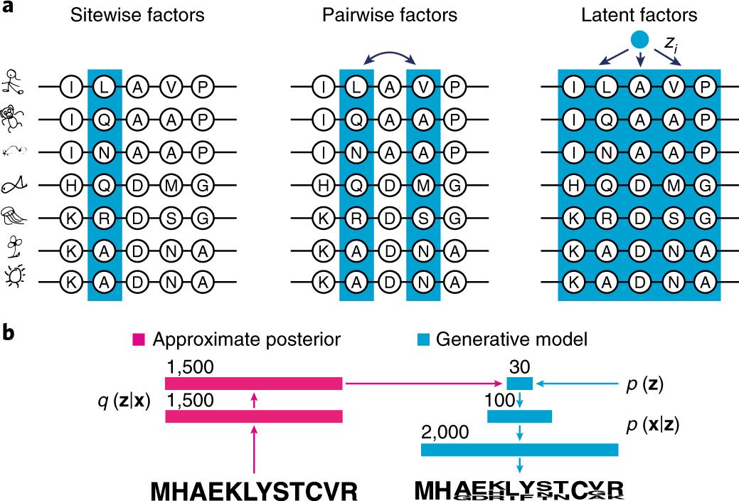 Deep generative models of genetic variation capture the