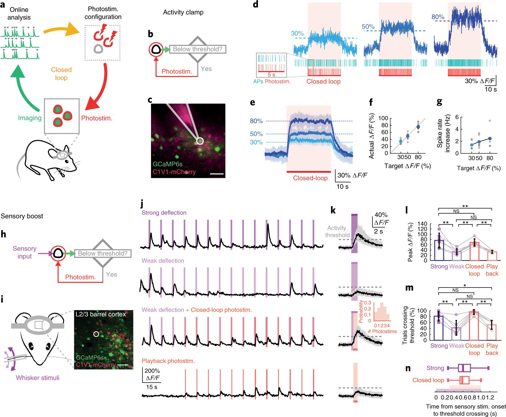 Closed-loop all-optical interrogation of neural circuits in vivo