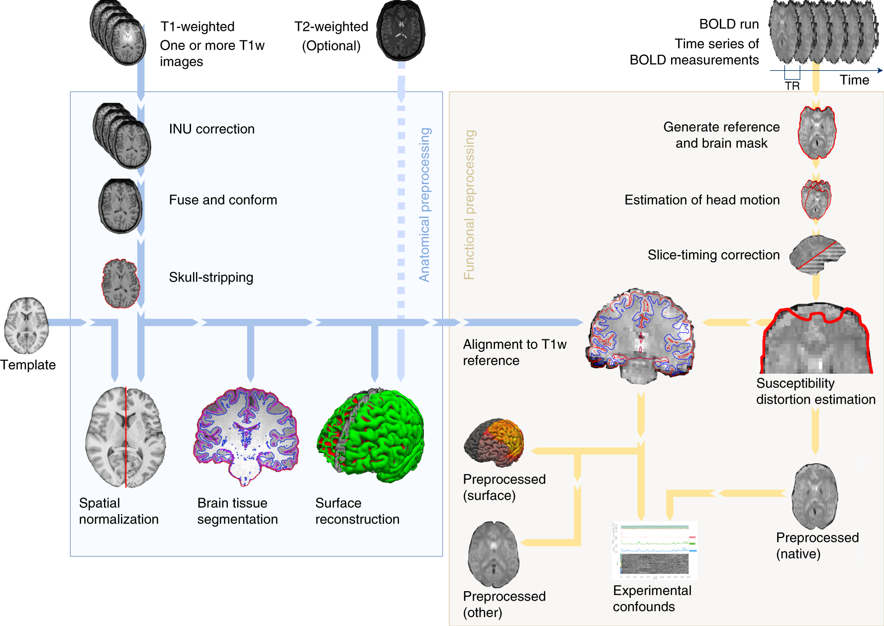 fMRIPrep: a robust preprocessing pipeline for functional MRI