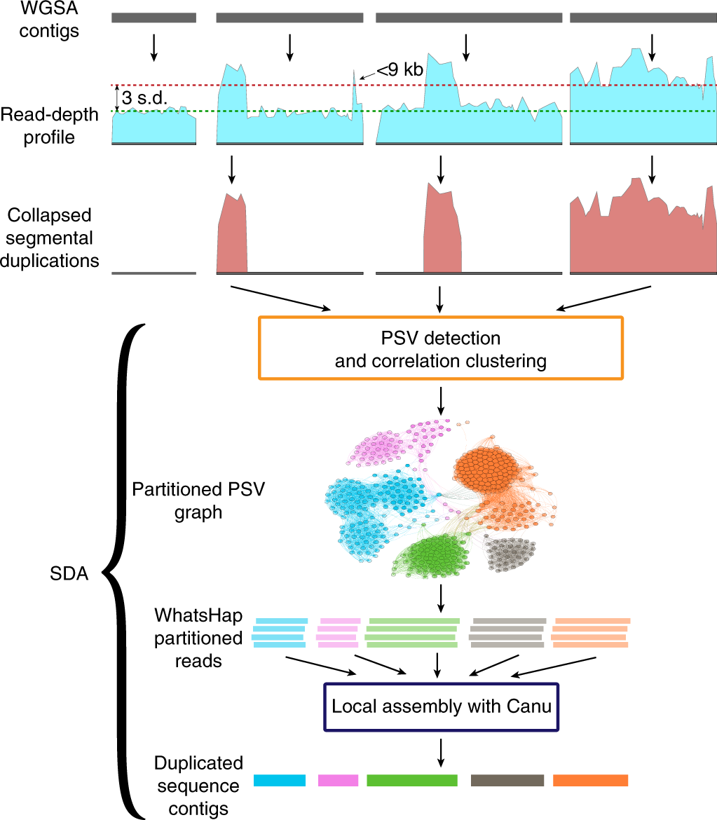 Long-read sequence and assembly of segmental duplications | Nature