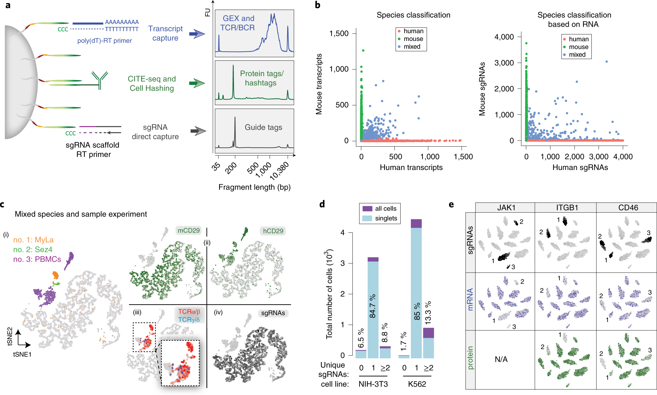 Multiplexed detection of proteins, transcriptomes, clonotypes and